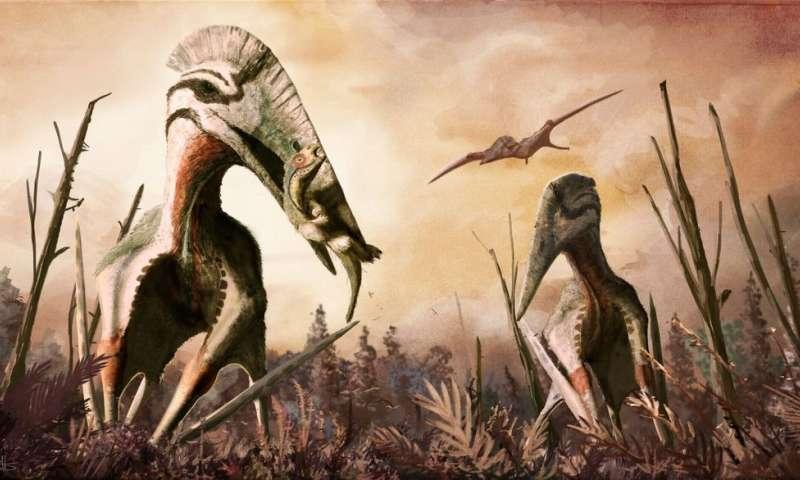 Une représentation d'Hatzegopteryx thambema, un ptérosaure, avec son cou puissamment musclé qui devait lui permettre d'attraper des proies de bonnes tailles. © Mark Witton