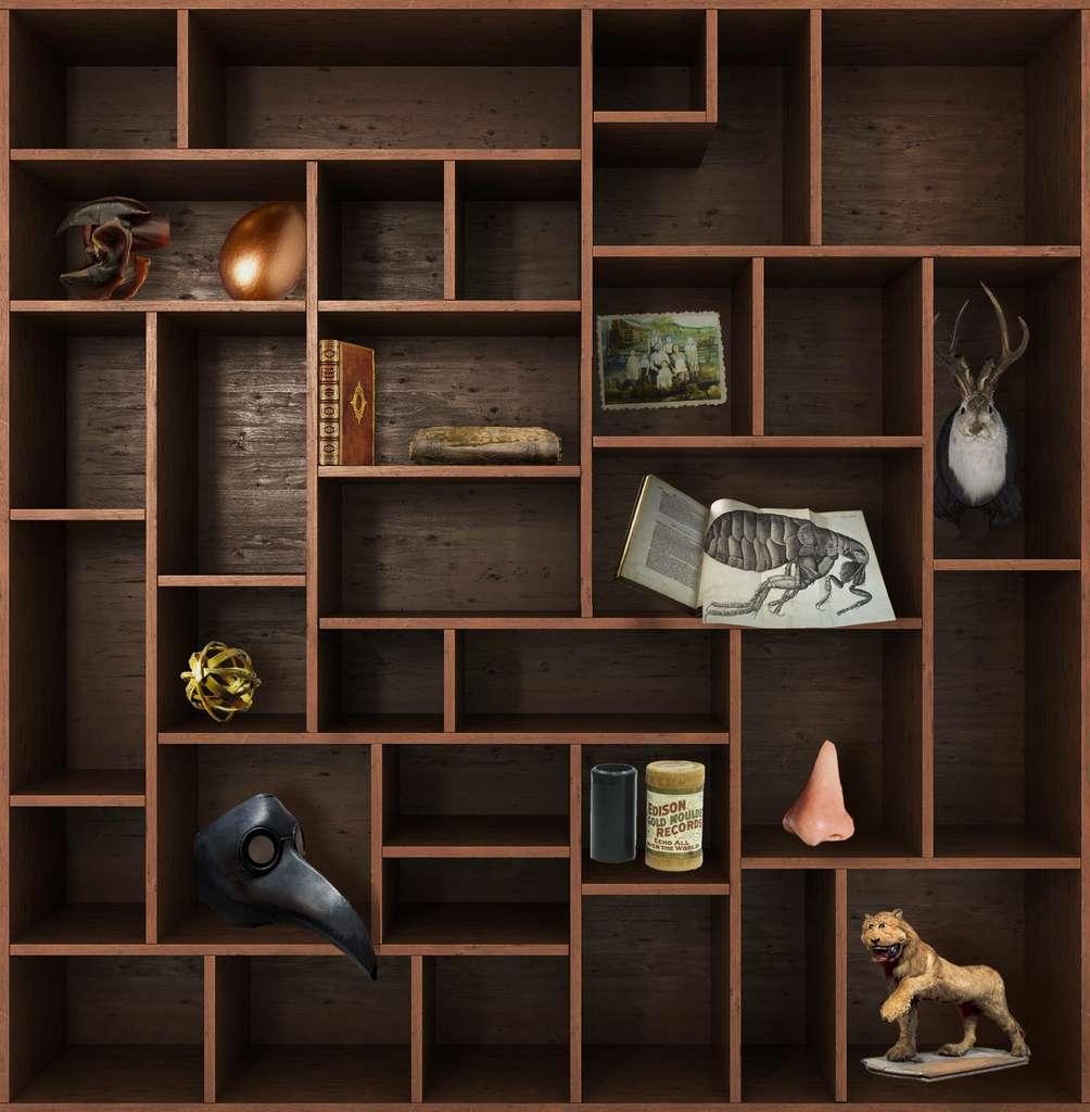 Et de onze ! Rendez-vous dans deux semaines pour un nouveau chapitre du Cabinet de curiosités. © nosorogua, Adobe Stock, Futura