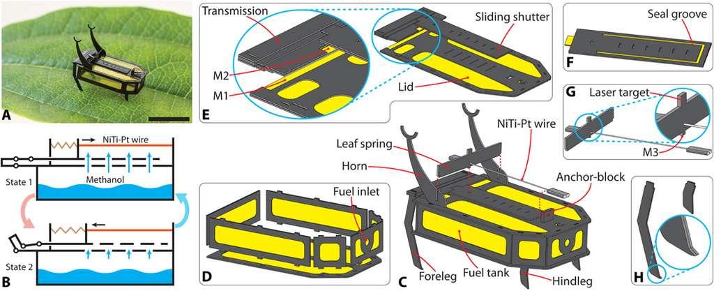 Conception robotique du robot autonome de 88 mg à l'échelle d'insectes alimenté par du carburant. (A) Photographie d'un prototype RoBeetle. (B) Schéma de principe du mécanisme d'actionnement de RoBeetle. (C) Vue éclatée de l'assemblage robotique. (D) Vue éclatée du sous-ensemble du réservoir de carburant. (E) Vue éclatée du couvercle du réservoir, de la transmission et du volet coulissant. (F) Côté inférieur du volet coulissant. (G) Fil composite NiTi-Pt et ressort à lames. (H) Membres antérieurs et postérieurs avec des griffes bioinspirées orientées vers l'arrière. © Yang et AL ., Science Robotics 2020