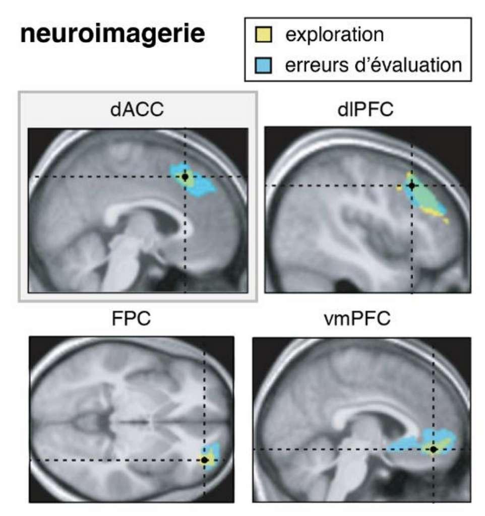 L'activité du cortex cingulaire antérieur, une région impliquée dans la prise de décision, fluctuait avec les erreurs d'évaluation des participants. © Inserm