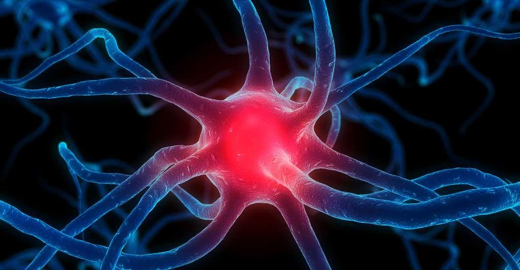La construction des souvenirs se fait via la potientialisation à long terme. Ici, un neurone actif. © Sebastian Kaulitzki, Shutterstock