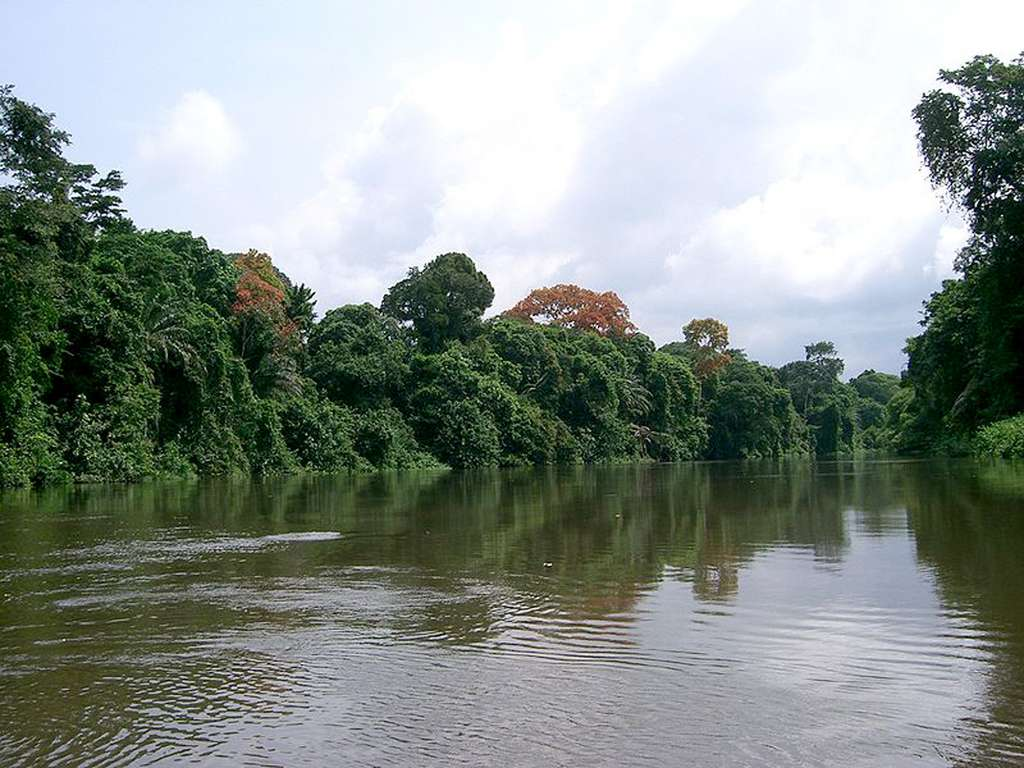 Forêt tropicale du Cameroun. © C C A-Share Alike 3.0