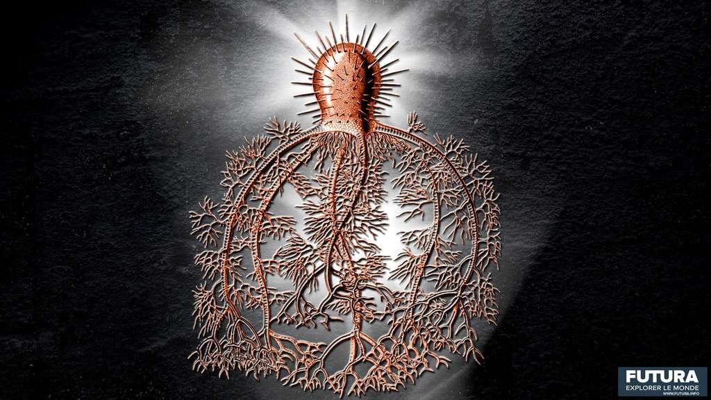 Des organismes fascinants