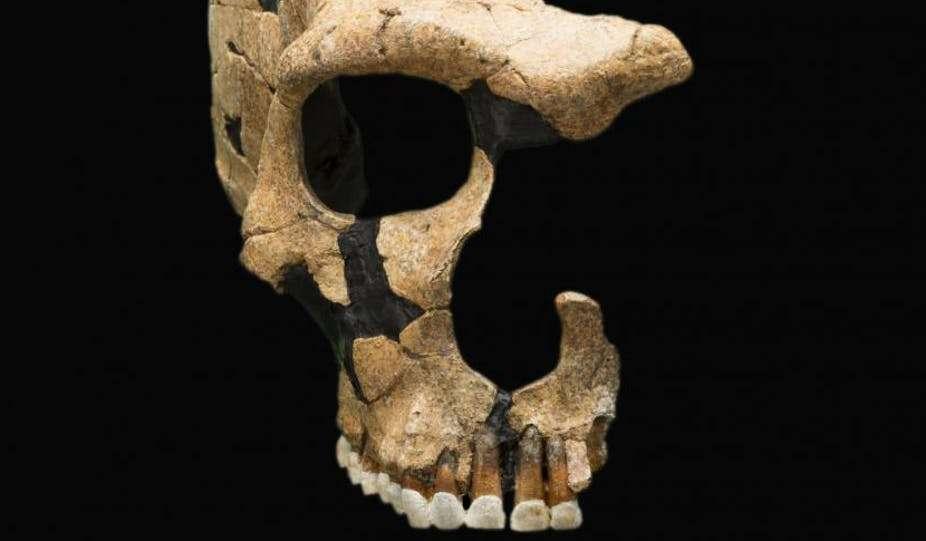 Un crâne de Néandertal présentant des traumas crâniens. © Smithsonian National Museum of Natural History