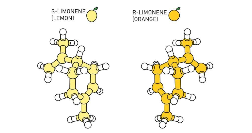 Dans la nature, de nombreuses molécules existent sous la forme de deux images miroirs l'une de l'autre. C'est le cas, par exemple du limonène (C10H16). L'une des variantes a une odeur de citron, l'autre, d'orange. © Johan Jarnestad, Académie royale des sciences de Suède