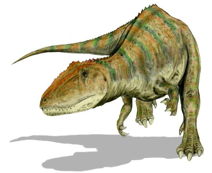 Le carcharodontosaure, un lézard aux dents de requin