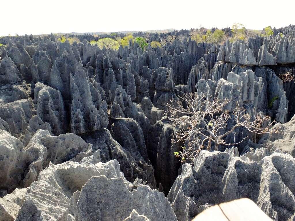 La forêt d'aiguilles rocheuses des Tsingy de Bemaraha. © Tee La Rosa, Flickr