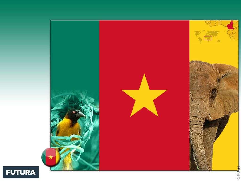 Drapeau : Cameroun