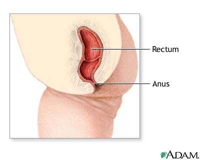 L'incontinence fécale peut être passive ou active, elle a plusieurs causes (sur ce schéma, une coupe du rectum). © ADAM Inc. DR
