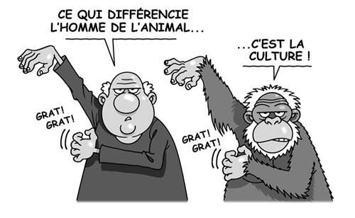 Les chimpanzés ont-ils des pratiques culturelles ? © Patrick Goulesque