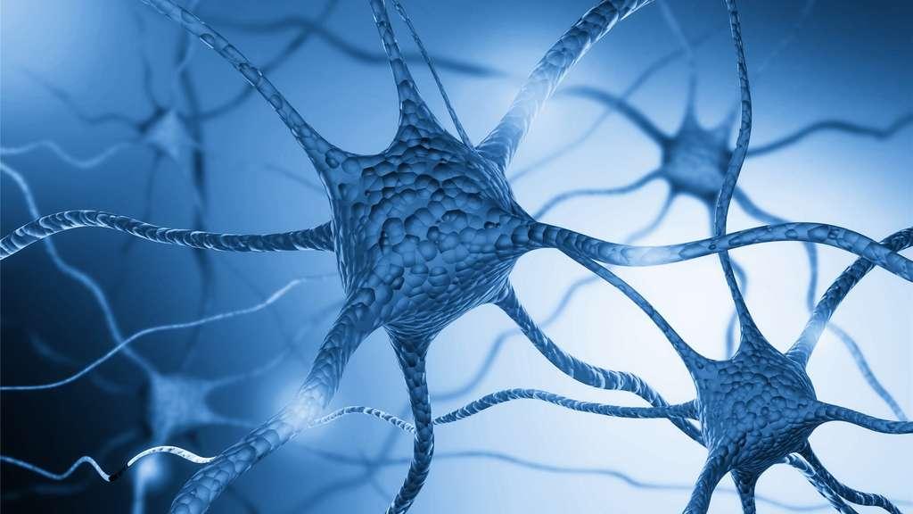 Dans la maladie de Parkinson, les neurones à dopamine de la substance noire du cerveau dégénèrent. © BillionPhotos.com, Fotolia