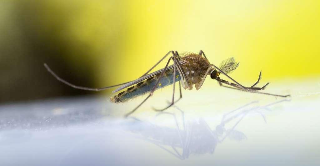 Comme pour la plupart des impacts liés au climat, les maladies toucheront en premier les personnes les plus vulnérables. © gordzam, Adobe Stock