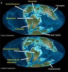 Deux représentations de la Terre au Crétacé inférieur (Early Cretaceous) et au Crétacé moyen (Middle Cretaceous), époques durant lesquelles les continents se séparent lentement (cliquer pour agrandir). En blanc, sont indiqués les endroits où ont été retrouvés des allosaures ancêtres des carcharodontosauridés, un groupe auquel Australovenator est apparenté. Les noms en jaune sont ceux des carcharodontosauridés. La connaissance des mouvements des plaques tectoniques peut ainsi être précieuse pour aider les paléontologues à reconstituer les arbres phylogénétiques. © Scott A. Hocknull, PlosOne