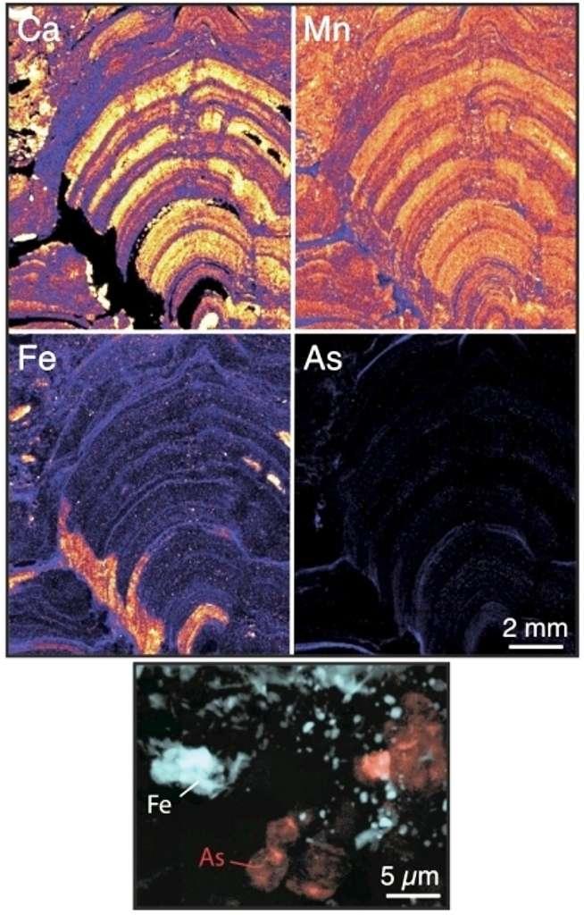 Imagerie par microfluorescence X des stromatolites de Tumbiana à différentes échelles, du centimètre (a) à la centaine de nanomètres (c). (a) Carte de distribution du calcium montrant l'organisation en bulbes carbonatés des stromatolites étudiés. (b) Carte de distribution de l'arsenic dans l'encart (b) de la figure (a) montrant que l'un des bulbes carbonatés est particulièrement enrichi en arsenic. (c) Image RVB de la zone (c) indiquée en (b) montrant la présence de globules de matière organique enrichis en arsenic (As, rouge) associés à des sulfures (Fe, bleu) et des micro-grains de cuivre (Cu, vert). Archées et bactéries représentent deux domaines distincts de micro-organismes unicellulaires. © CNRS-Insu, Pascal Philippot