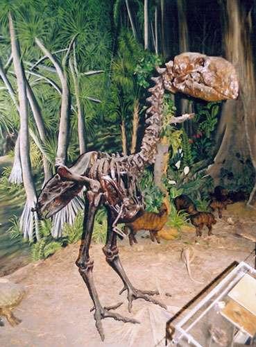 Squelette de Gastornis de l'Éocène inférieur du Wyoming. © DR