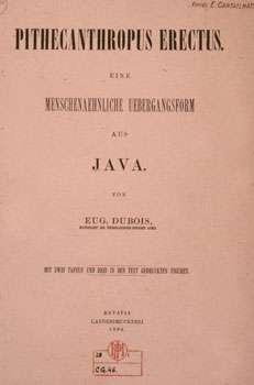 Pithecanthropus erectus par Eugène Dubois en 1894. © Bibliothèque IPH, MNHN