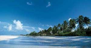 Palmiers en Amazonie