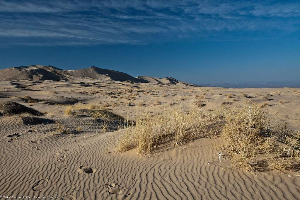Dunes de Kelso © Mike Baird - cc by nc 2.0