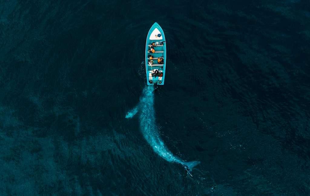 La baleine et les touristes, Mexique. © Joseph Cheires, Drone Photo Awards