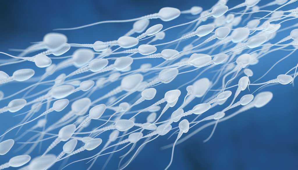 La production de spermatozoïdes est stimulée par la testostérone. © Tatiana Shepeleva, Fotolia