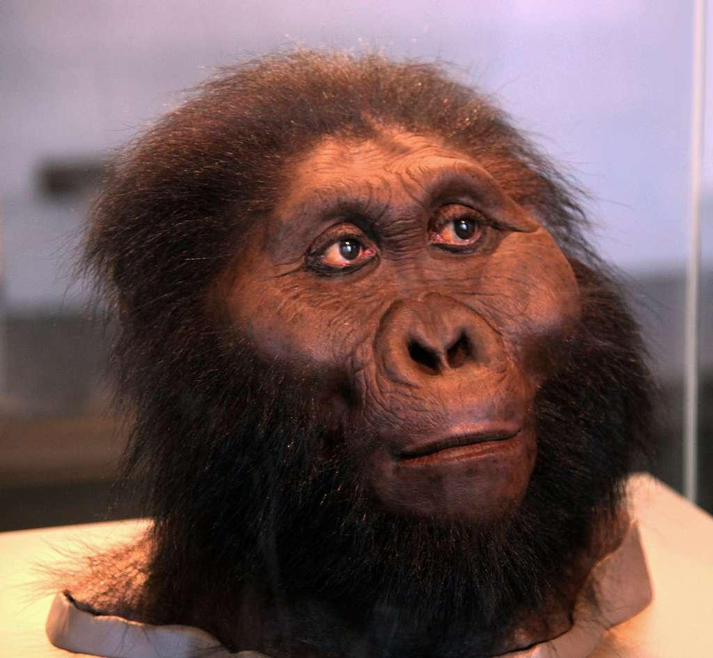 Une reconstitution du visage de Paranthropus boisei (Smithsonian Museum of Natural History, Washington, D.C.). © Tim Evanson, Flickr, CC by-sa 2.0