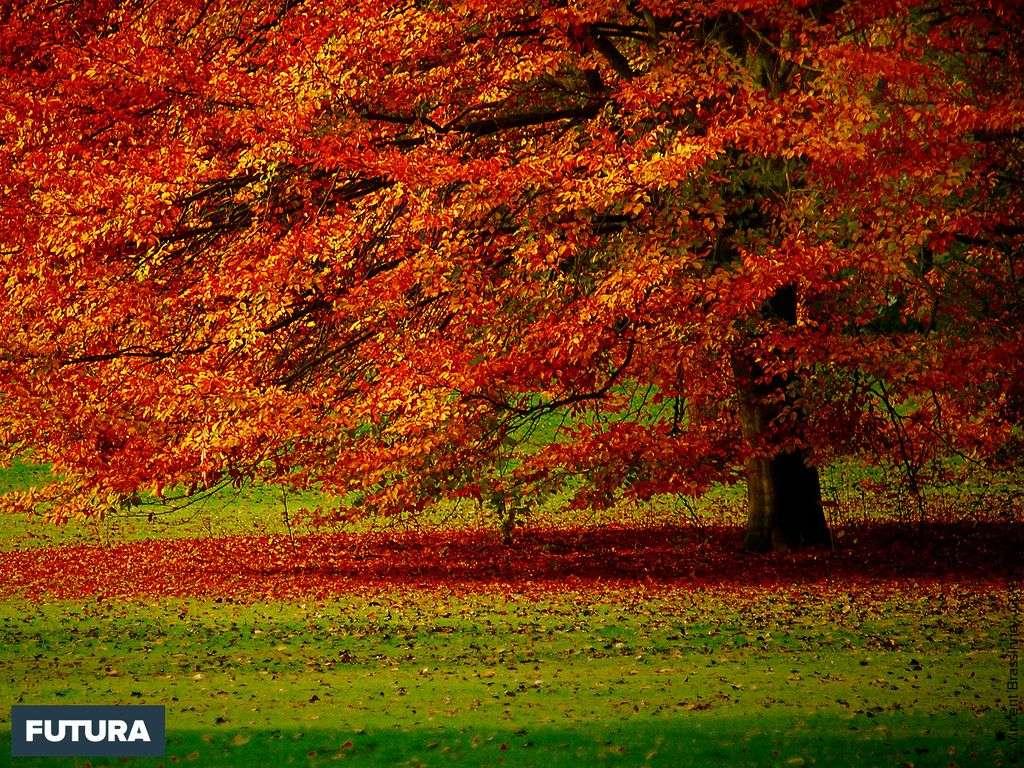 Automne jardin national botanique - Belgique