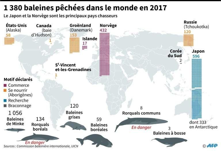 Localisations, pays et raisons de la chasse à la baleine dans le monde en 2017. © AFP/Archives