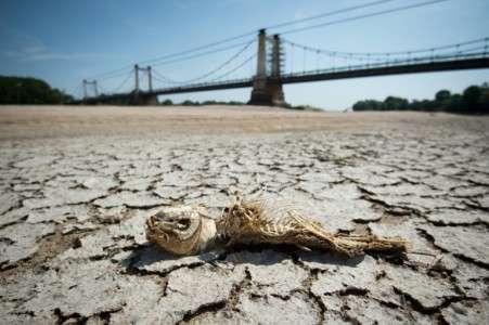 La Loire à sec à Montjean-sur-Loire, dans l'ouest de la France, le 24 juillet 2019 © Loic Venance, AFP