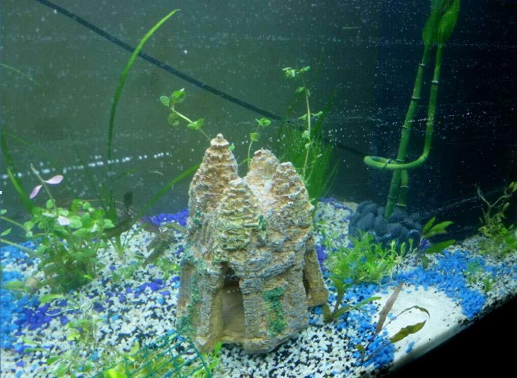Un écosystème dans l'aquarium. © Élisabeth Piotelat
