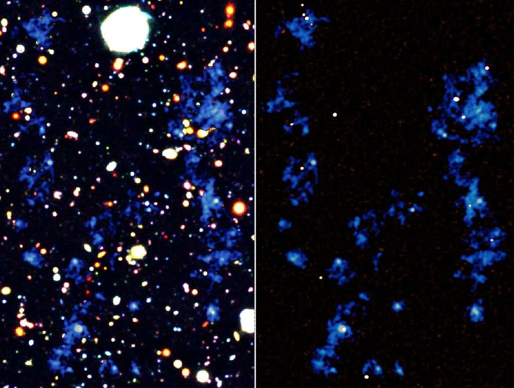 Sur les deux images côte à côte, les filaments de gaz intergalactique constitués de matière normale sont identifiés et représentés en bleu. Les fonds des cartes sont une image prise dans le visible avec le télescope Subaru (à gauche) et une image dans le domaine des ondes radios millimétriques prise avec Alma (à droite). On constate qu'il existe donc bien de vastes structures gazeuses et des filaments (à gauche) qui connectent un certain nombre de galaxies à sursaut de formation d'étoiles (à droite en fausse couleur blanche, en jaune ce sont les quasars). © Riken