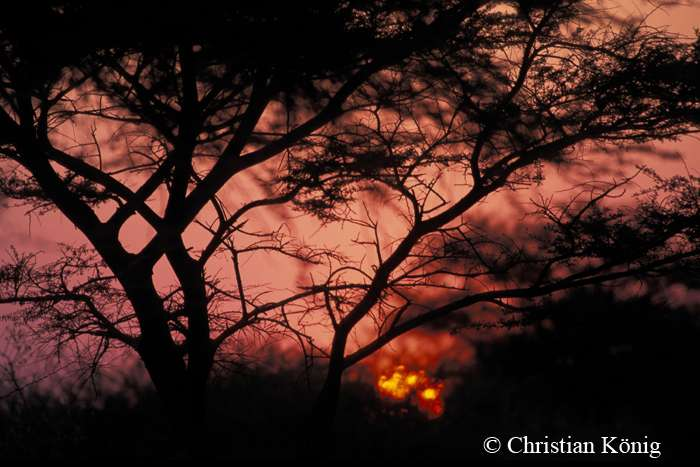 Coucher de soleil en Namibie. Les nuits peuvent être particulièrement fraîches dans la région. © Christian König, DR