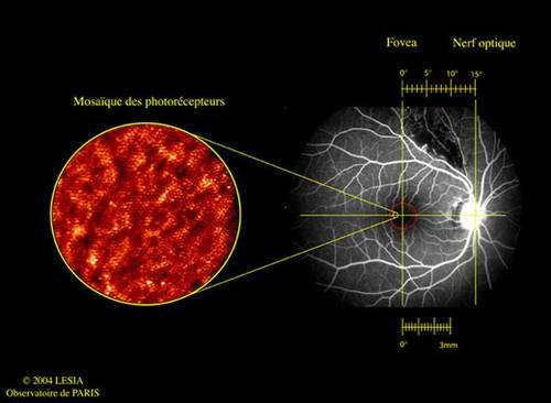 Exemple de valorisation d'une technique initiée par les astronomes : image de la rétine réalisée par optique adaptative. Cette technique développée par les astronomes est maintenant rentrée à l'hôpital afin de prendre des images rétiniennes à haute résolution, images autrement impossibles à réaliser, permettant ainsi la prévention ou le traitement de maladies de l'œil. L'image de gauche est la partie centrale de la rétine, où l'on distingue nettement les cônes (les granules) dont la taille est de 2 à 4 µm de diamètre. Les cônes sont les cellules réceptrices de l'œil, tels les pixels d'une caméra CCD. © Lesia, Observatoire de Paris