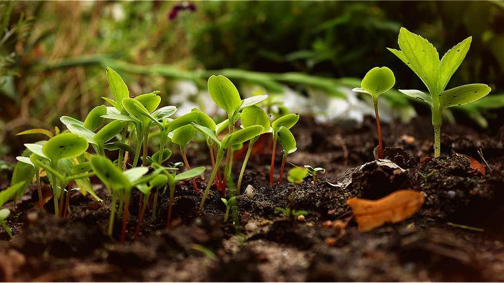 La tourbe est une matière organique végétale aux multiples vertus. © WhisperingJane_ASMR by Pixabay