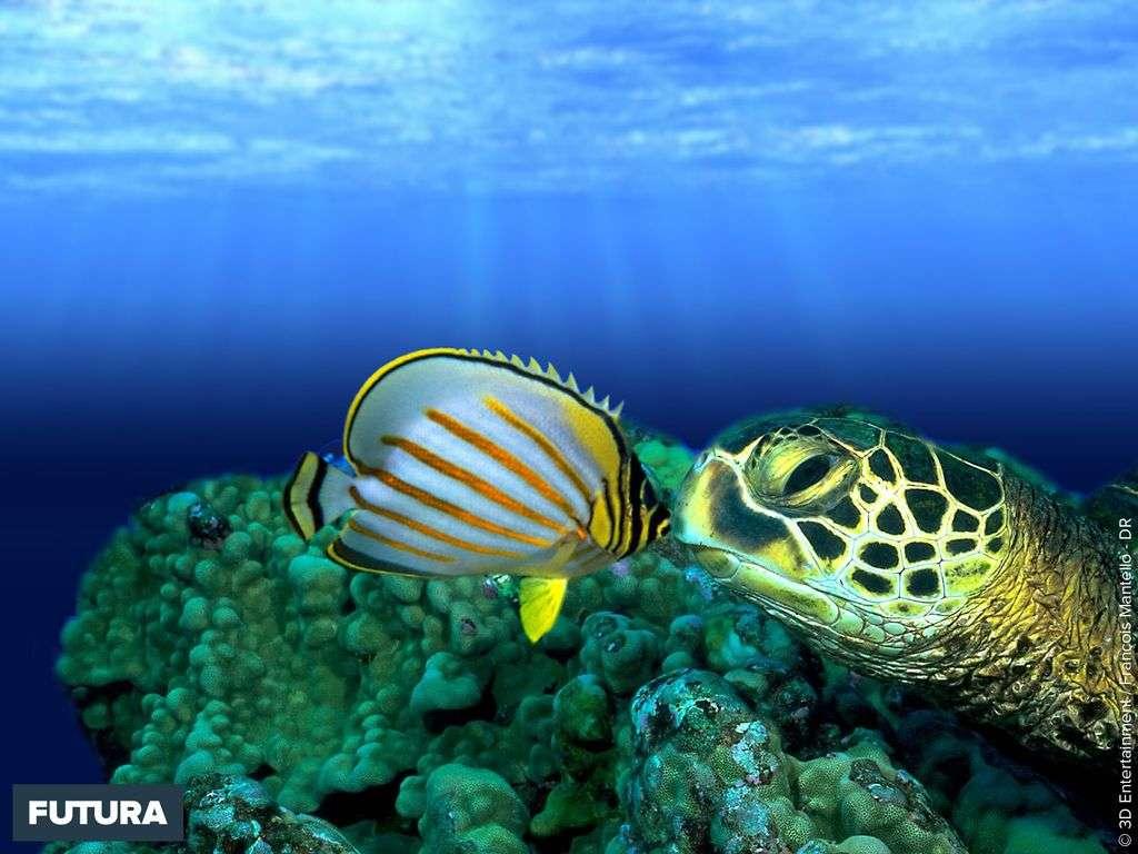 Le baiser de la tortue sous-marine
