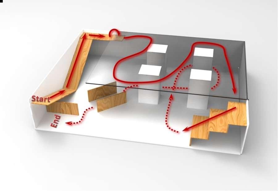 Uniquement avec la pensée d'un humain, le rat est parvenu à parcourir un labyrinthe avec des changements de direction et des marches à descendre © Nature's Scientific Reports