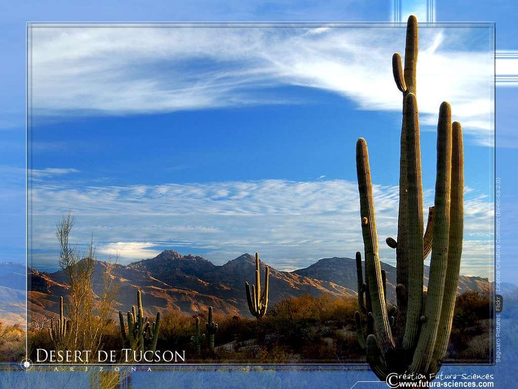 Désert de Tuscon