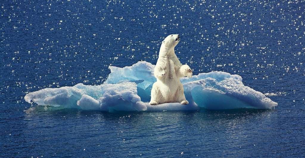 Les ours blancs vivent dans la région de l'Arctique. Leur survie est liée à celle de la banquise. © cocoparisienne, Pixabay, CC0 Creative Commons