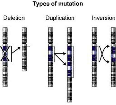 Mutation chromosomique Reproduction et utilisation interdites