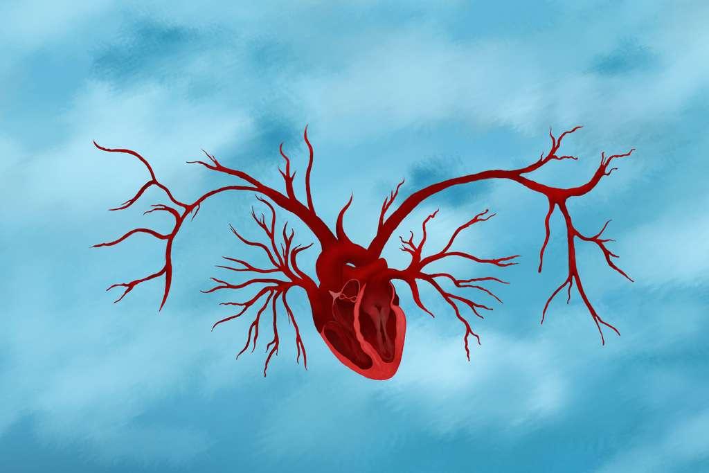 Les récepteurs H1 et H2 de l'histamine jouent un rôle clé dans la vascularisation musculaire, la sensibilité à l'insuline et la capacité aérobie. © Ulia Koltyrina, Adobe Stock