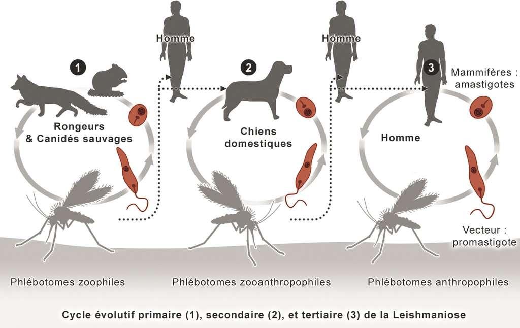 Comment les virus atteignent les animaux et l'Homme. © 2015-2016 UMVF - Université Médicale Virtuelle Francophone