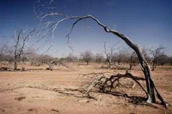 Végétation anéantie dans une région affectée par la sécheresse, sol Dior, Sénégal © FAO, Ch. Errath