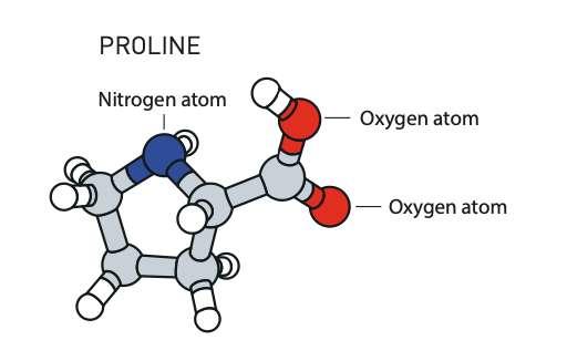 Lorsque Benjamin List a testé les capacités de catalyseur de la proline, les résultats ont tout de suite été au rendez-vous. © Johan Jarnestad et Agnes Moe, Académie royale des sciences de Suède