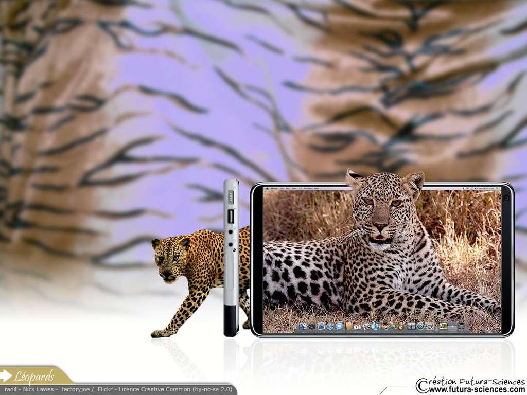 Duo de léopards