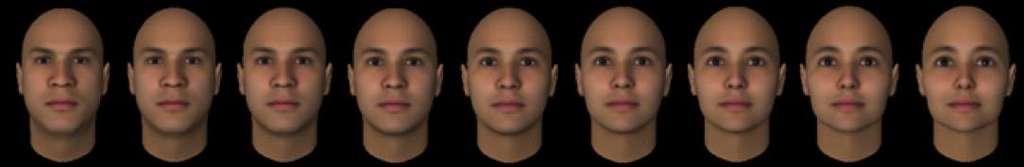 Le morphing est une transformation progressive d'une image en une autre, ici d'un visage d'homme (à gauche) en visage féminin (à droite). Le visage du milieu est androgyne, un juste milieu entre les deux extrêmes. © Afraz et al., Current biology