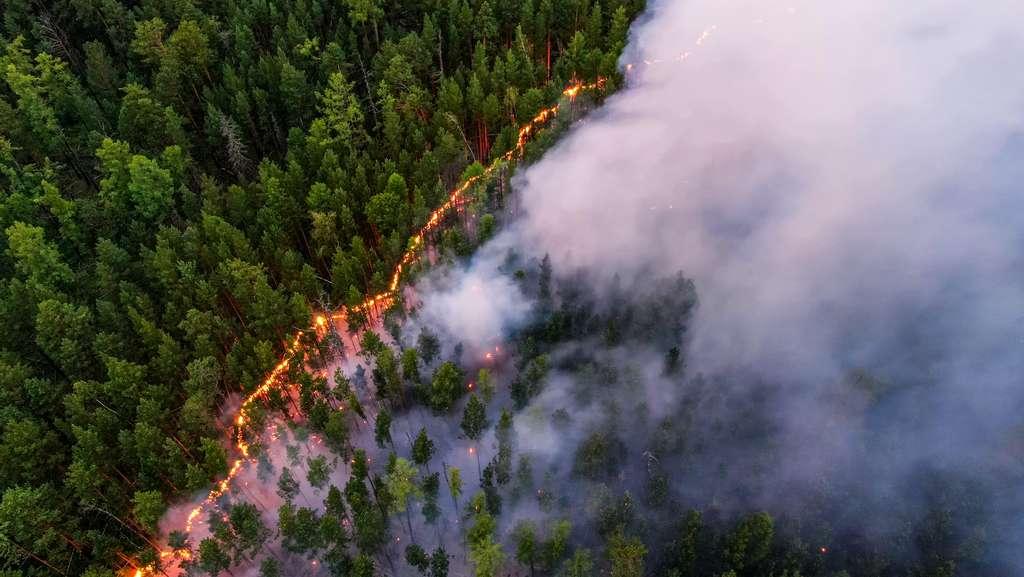 Les incendies sont favorisés par la chaleur exceptionnelle dans la région. © Greenpeace