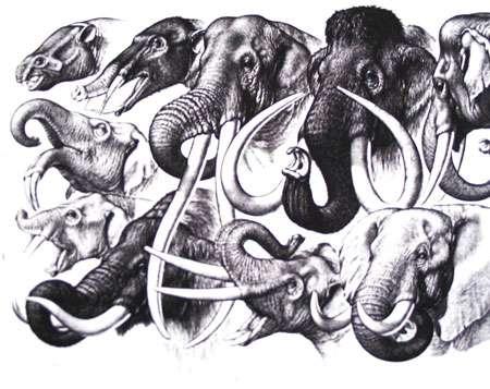 Proboscidiens Photo de famille