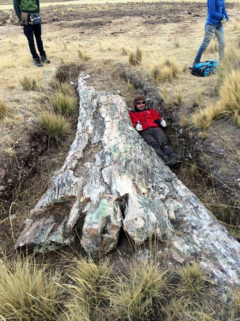 Un des scientifiques de l'expédition allongé à côté du tronc fossilisé. © Carlos Jaramillo, Smithsonian Tropical Research Institue