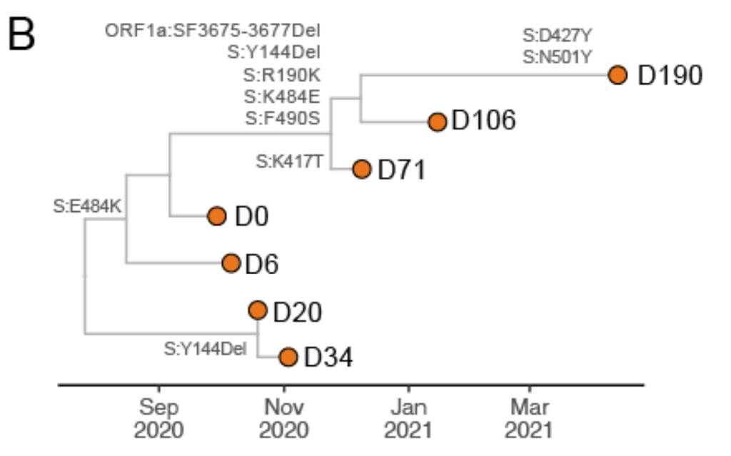 Les mutations identifiées chez la patiente de 36 ans tout au long de sa surveillance. La lettre D, suivie d'un chiffre, correspond au jour après le début du suivi auquel le prélèvement a été fait. © Karim F et al., medrXiv