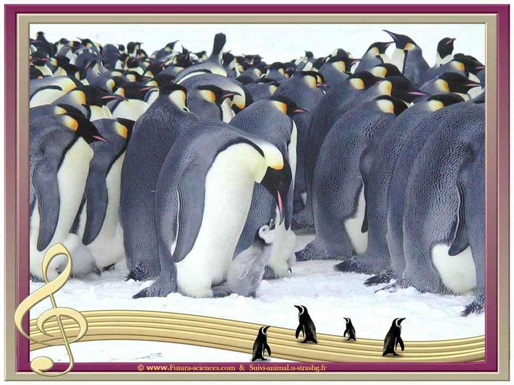 Concert au pôle