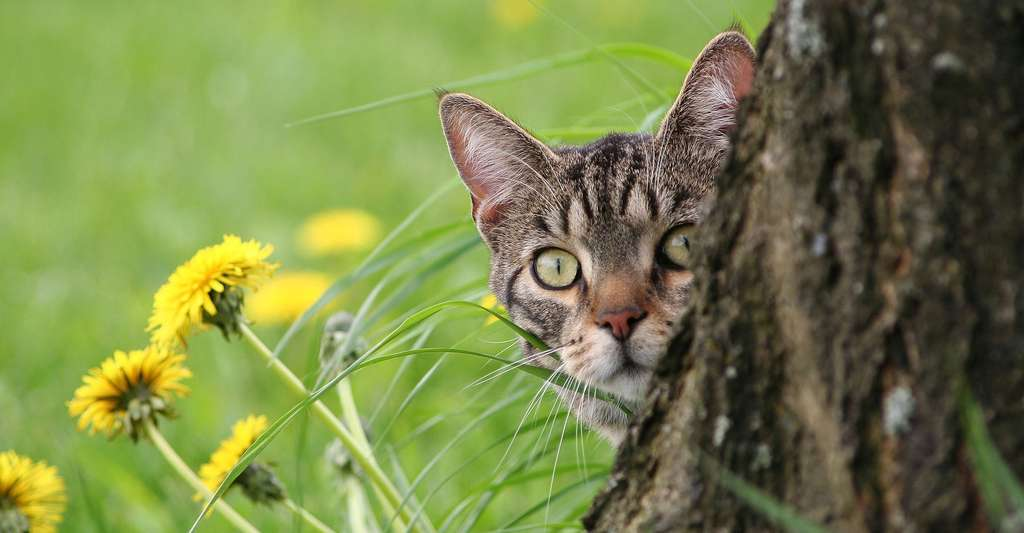 Le chat, un animal fascinant. © Azalea Lady, Pixabay, DP